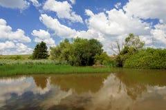 Тростники на пруде в летнем времени стоковая фотография rf