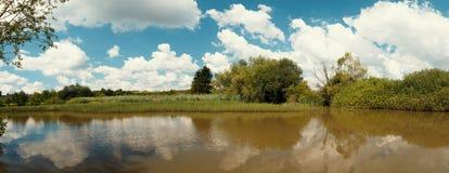 Тростники на пруде в летнем времени стоковое фото
