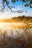 Тростники на пляже на туманном утре осени стоковые фото