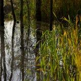 Тростники на речном береге на солнечный день стоковое фото