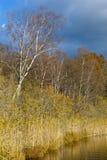 тростники озера Стоковое Фото