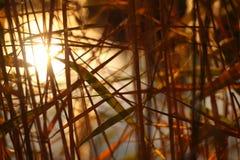 Тростники около пруда стоковое изображение