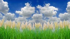 тростники окружающей среды содружественные Стоковые Изображения RF