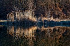 Тростники отраженные в озере стоковое фото