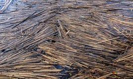 Тростники плавая на озеро стоковые изображения