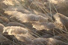Тростники под солнцем Стоковые Фотографии RF