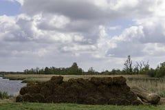 Тростники предела стоковое фото