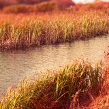 Тростники сухой травы речного берега ландшафта осени знамени естественные мочат предпосылку выборочного фокуса природы запачканну стоковые фотографии rf