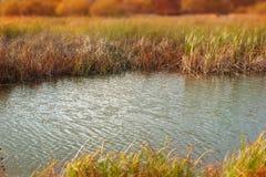 Тростники сухой травы речного берега ландшафта осени знамени естественные мочат предпосылку выборочного фокуса природы запачканну стоковые изображения rf