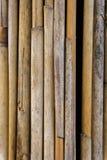 Тростники текстурируют подобную к бамбуку стоковые фотографии rf