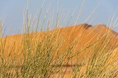 Тростники травы и песчанные дюны стоковые фотографии rf