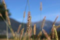 Тростники травы стоковая фотография rf