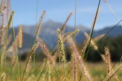 Тростники травы стоковое изображение rf