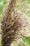 Тростники шипов, конец-вверх Стоковое Фото