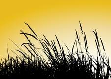 тростники Стоковые Фото