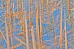 Тростники Стоковые Изображения RF
