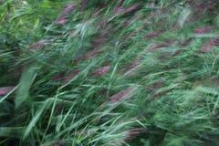 Тростники Стоковое фото RF