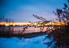 Тростники Стоковые Изображения