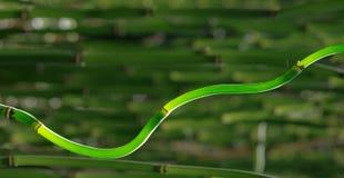 Тростники Horsetail стоковое фото rf