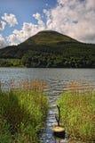 тростники loweswater Стоковые Изображения