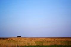 тростник болотоов Стоковая Фотография