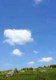 тростник горизонта травы Стоковая Фотография