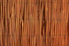 тростник загородки Стоковые Фото