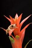 тростник мраморизованный лягушкой стоковые изображения
