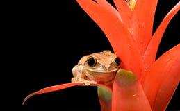 тростник мраморизованный лягушкой стоковые фото