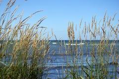 Тростник на пляже Стоковое Изображение