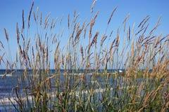 Тростник на пляже Стоковая Фотография