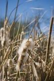 тростник озера Стоковое Изображение RF