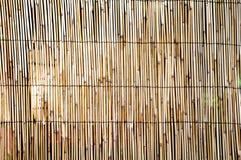 тростник предпосылки Стоковые Фото