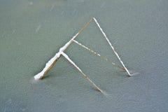 Тростник стержня на льде Стоковое Изображение RF