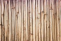 Тростник цветочного узора Стоковые Фотографии RF