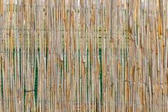 тростник циновки Стоковая Фотография RF