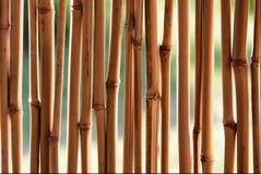 тросточка бамбука предпосылки Стоковые Изображения