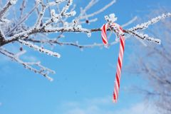 Тросточка конфеты на снежной ветви Стоковые Фотографии RF