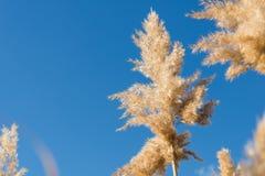 Тросточка на предпосылке неба Стоковая Фотография