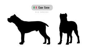Тросточка Corso породы собаки стоковые фотографии rf
