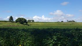 Тросточка fields Австралия стоковое изображение