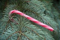 Тросточки конфеты на рождественской елке Стоковое фото RF