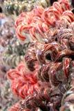 Тросточки конфеты Стоковые Фотографии RF