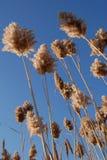тросточки Стоковое Фото