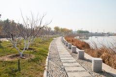 тротуар парка Стоковое фото RF