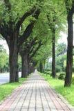 тротуар Стоковые Фото