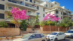 Тротуар Town's садовничая с деревьями Judas в Израиле стоковое фото