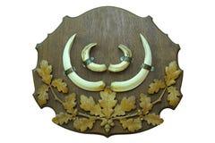 Трофей звероловства дикого кабана Стоковое Фото