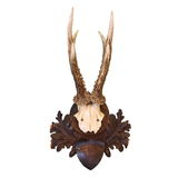 Трофей звероловства оленей косуль Стоковая Фотография RF