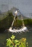труба листьев Стоковые Изображения RF